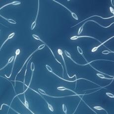 Espermiograma