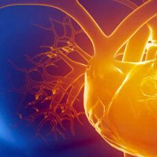 Perfil Cardiovascular